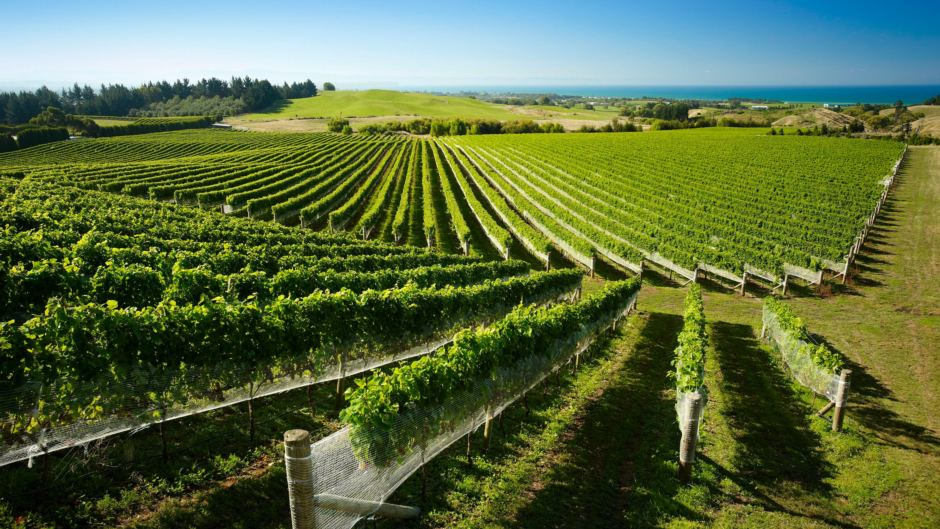 Hawkes Bay Wineries